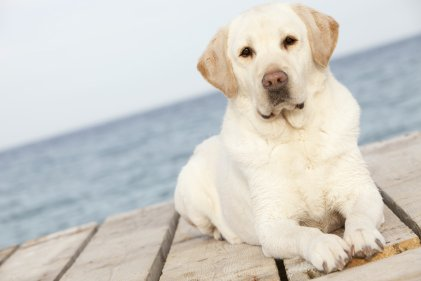 small-dog-on-dock-istock